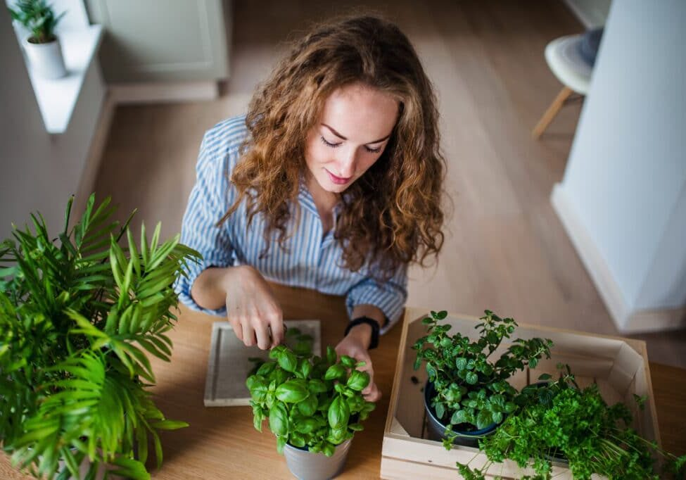 Top view of young woman standing indoors at home, cutting herbs.